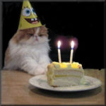 Cat with birthday hat on