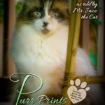 Purr Prints of the Heart: A Cat's Tale of Life, Death, and Beyond