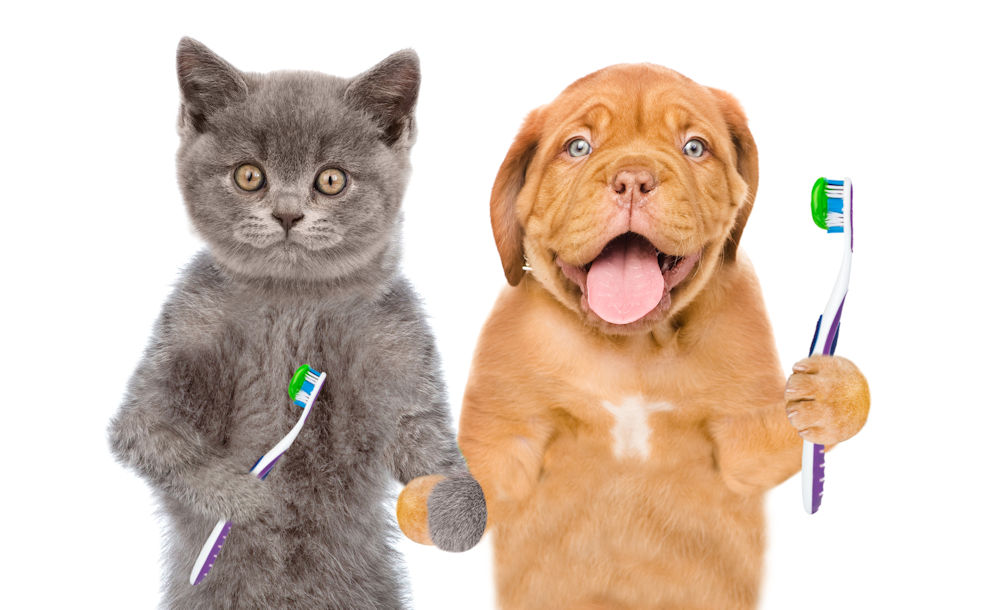 cat and dog holding toothbrush
