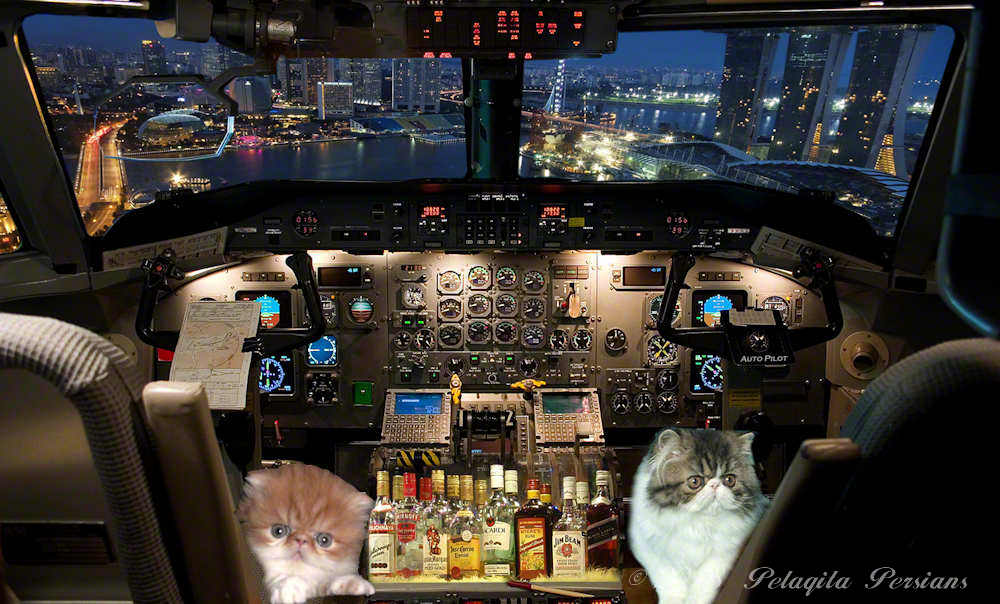 airplane cockpit with two kittens sitting in captain chairs