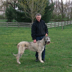 Man with irish wolfhound dog
