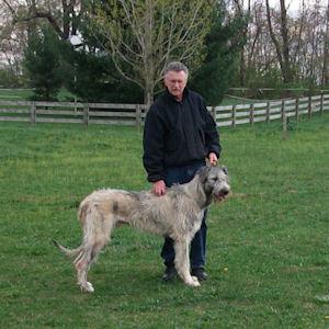 Man with irish wolfhound dog