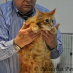 cat with cfa judge gene darrah