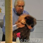 cfa judge gene darrah with black persian cat