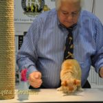 cat and cfa judge gene darrah