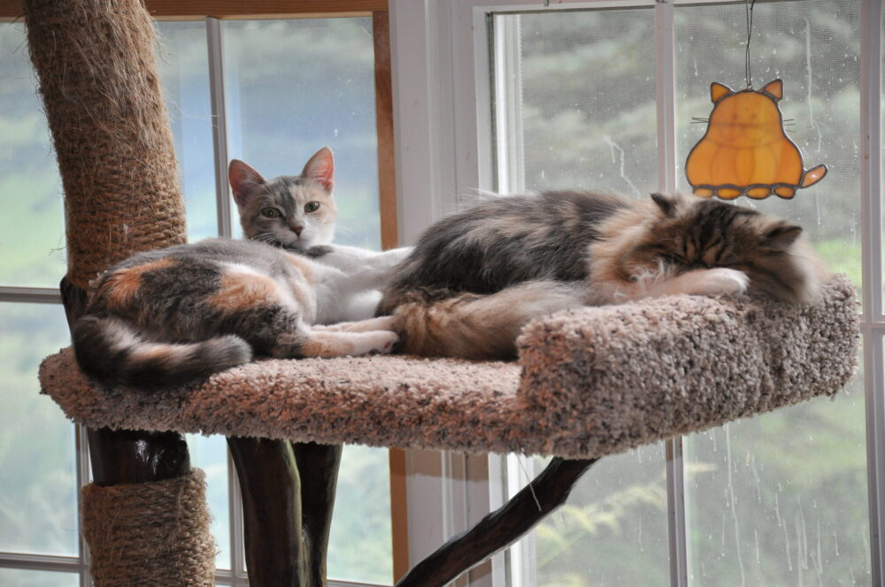 two cats laying in a cat tree