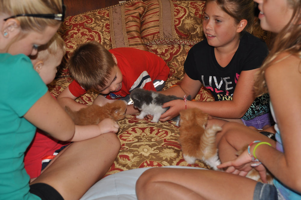 children playing with young kittens