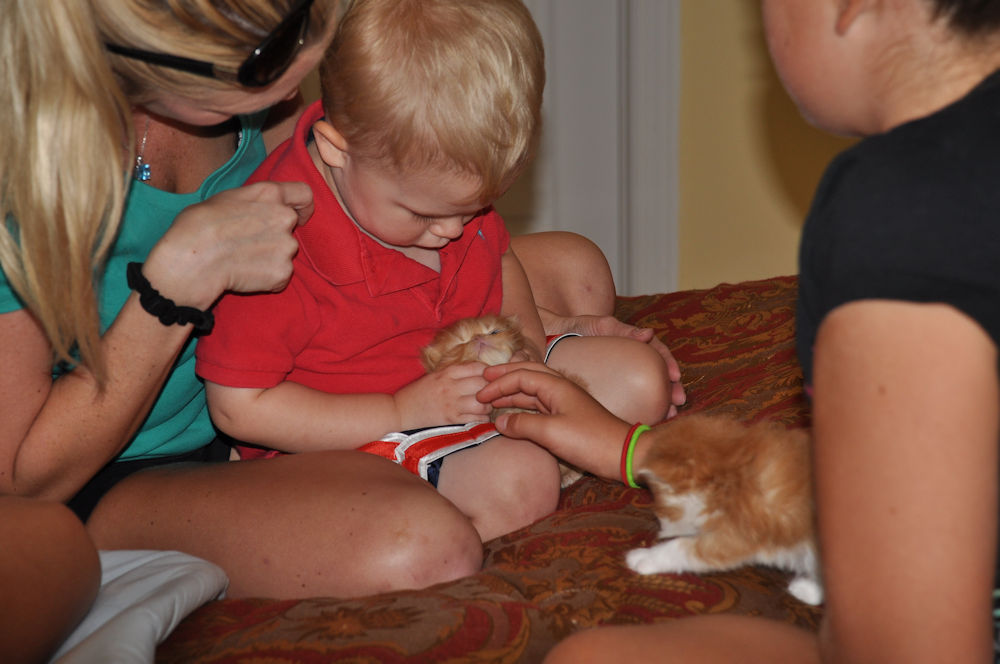 child holding a kitten
