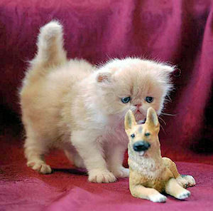 Persian kitten with dog figurine