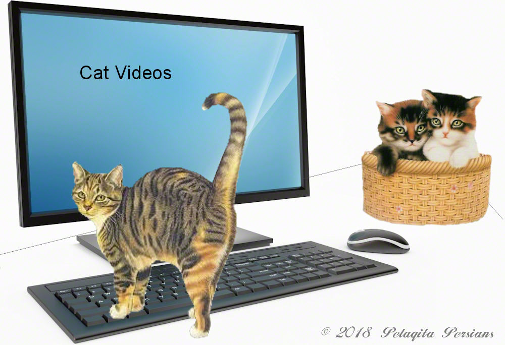 Cats and kittens on desk and computer