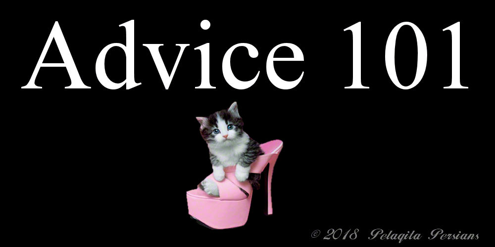 Advice 101 - with a kitten sitting in a pink stiletto