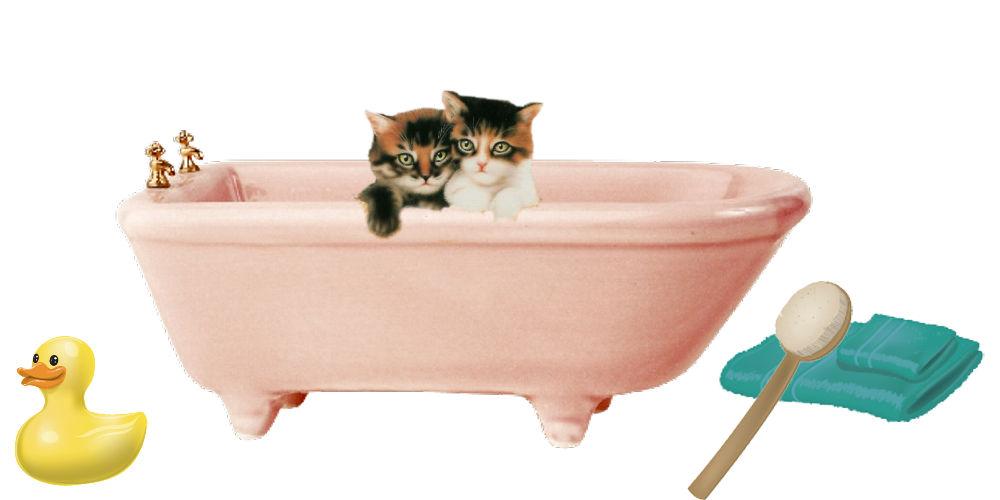 Persian cat bathing, Persian kitten bathing