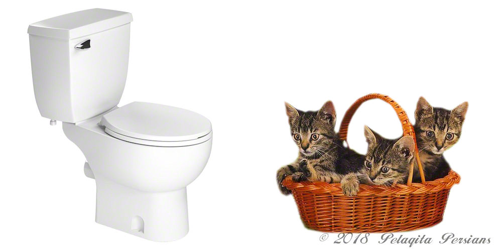 White toilet with basket of kittens