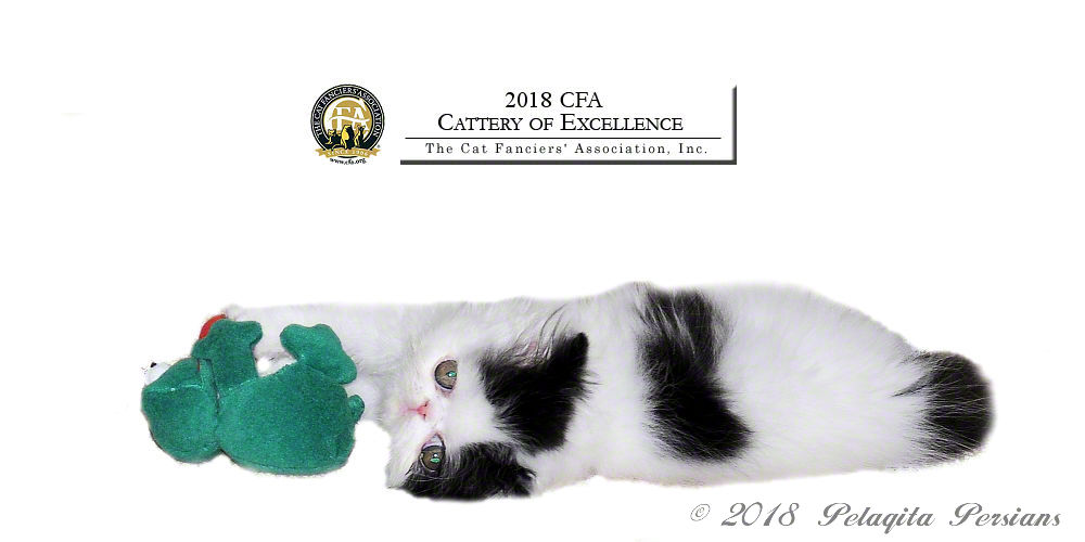 cfa cattery of excellence