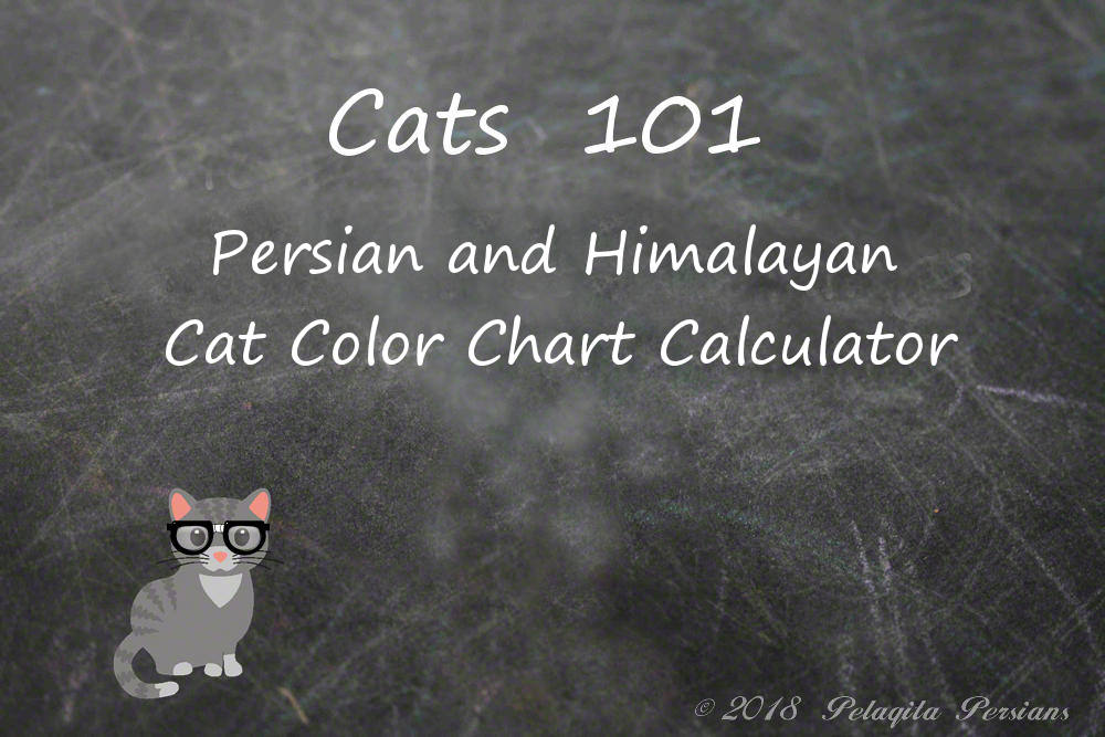 Persian and Himalayan Cat Color Chart Calculator