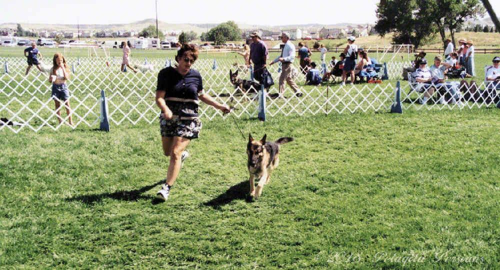 woman running German Shepherd Dog around dog show ring
