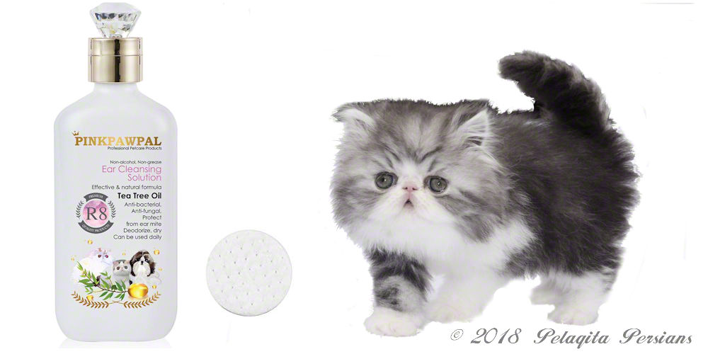 Persian kitten with ear cleaning solution
