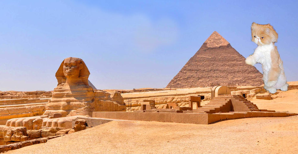 Ancient Egypt with Persian cat leaning on pyramid