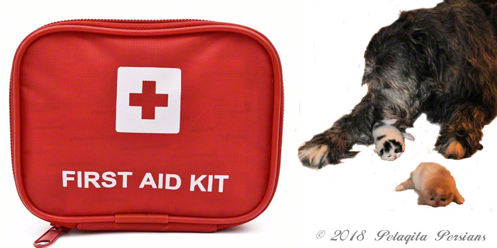 First aid kit and irish wolfhound dog with Persian kittens