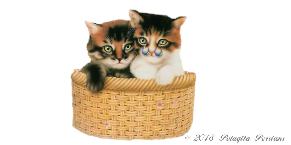 Two kittens with tears