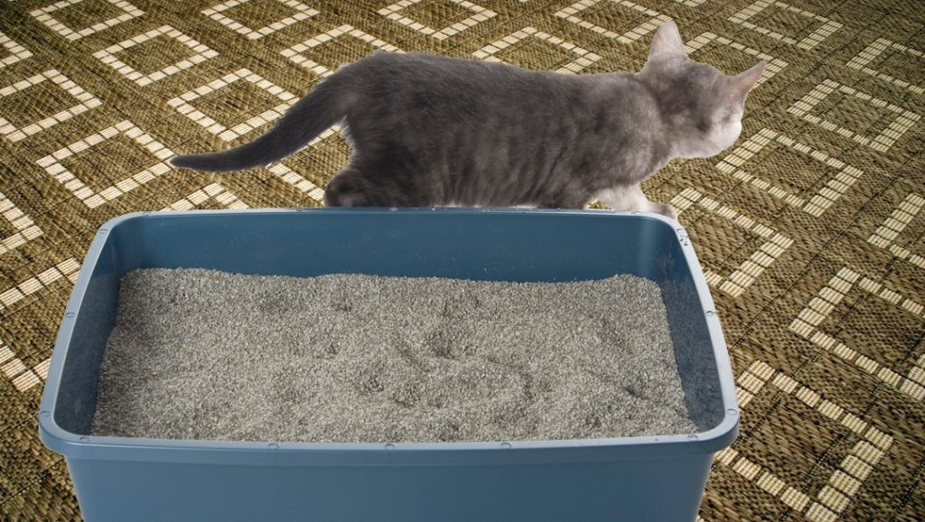 cat litter box and kitten