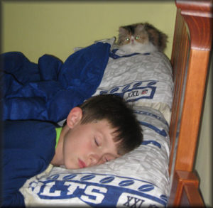 child sleeping with Persian kitten