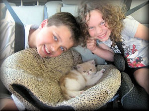 two children with their new persian kitten