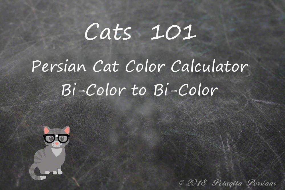 Persian cat color calculator | bi-color to bi-color color calculator
