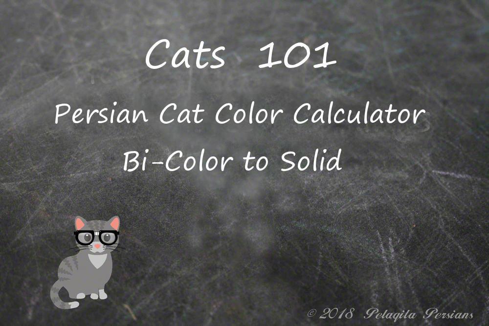 Persian cat color calculator - bi-color to solid