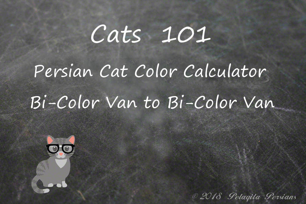 Persian cat color calculator bi-color van to bi-color van