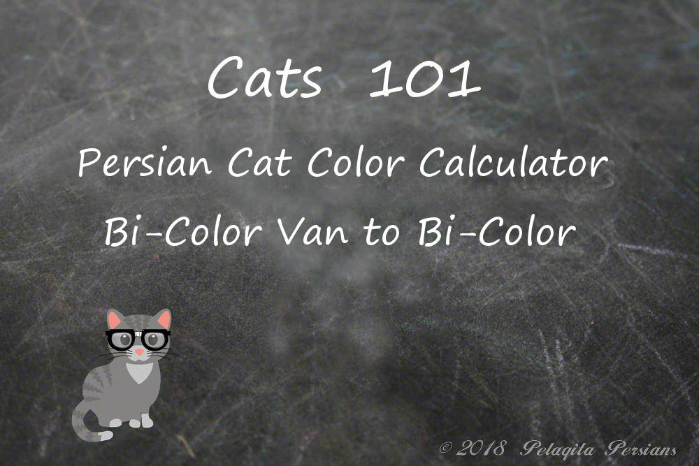 Persian Cat Color calculator bi-color van to Bi-color