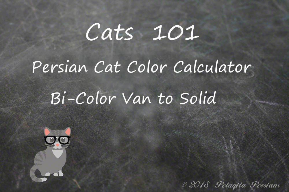 Persian cat color calculator - bi-color van to solid