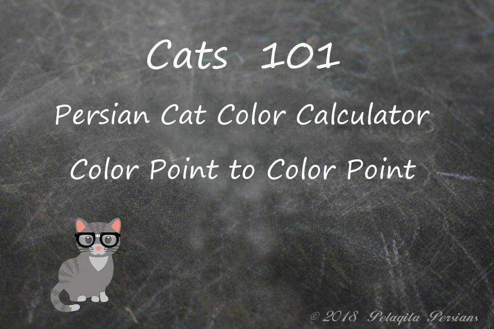 Persian cat color calculator - color point to color point color calculator