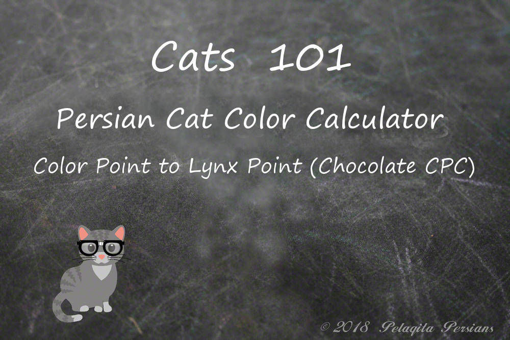 Persian cat color calculator - color point to lynx point (chocolate CPC) color calculator