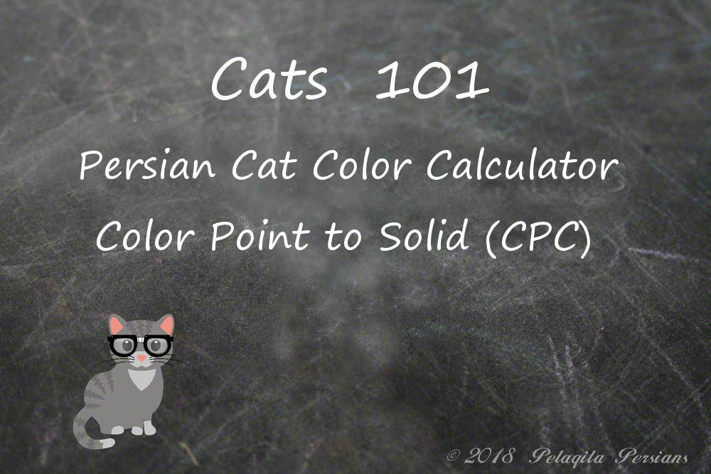 Persian cat color calculator - color point to solid (CPC) color calculator