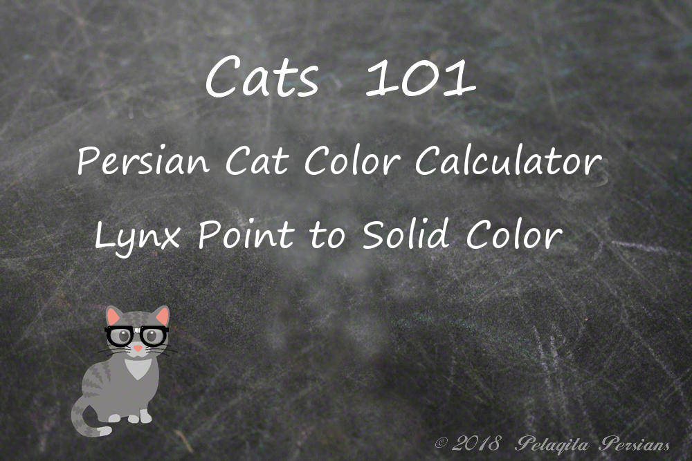 Persian cat color calculator - Lynx Point to solid (CPC) color calculator