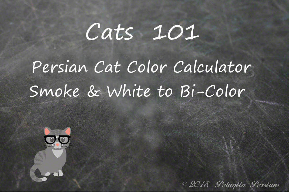 Persian cat color calculator - Smoke & white to Bi-Color