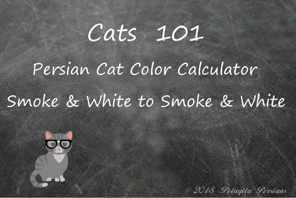 Persian cat color calculator - Smoke and White to Smoke and White