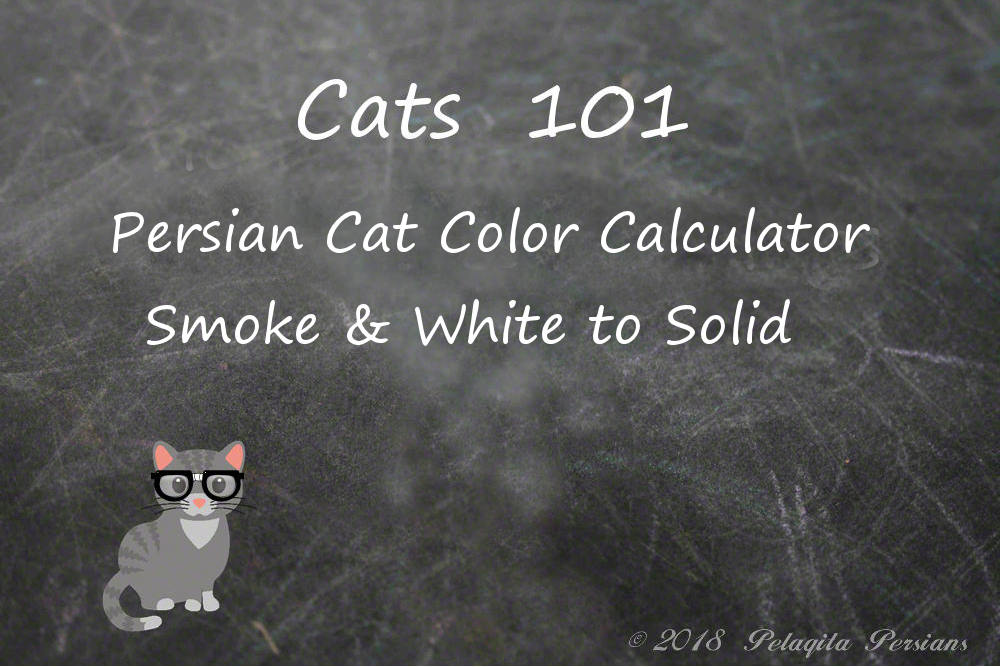 Persian cat color calculator - smoke & white to Solid