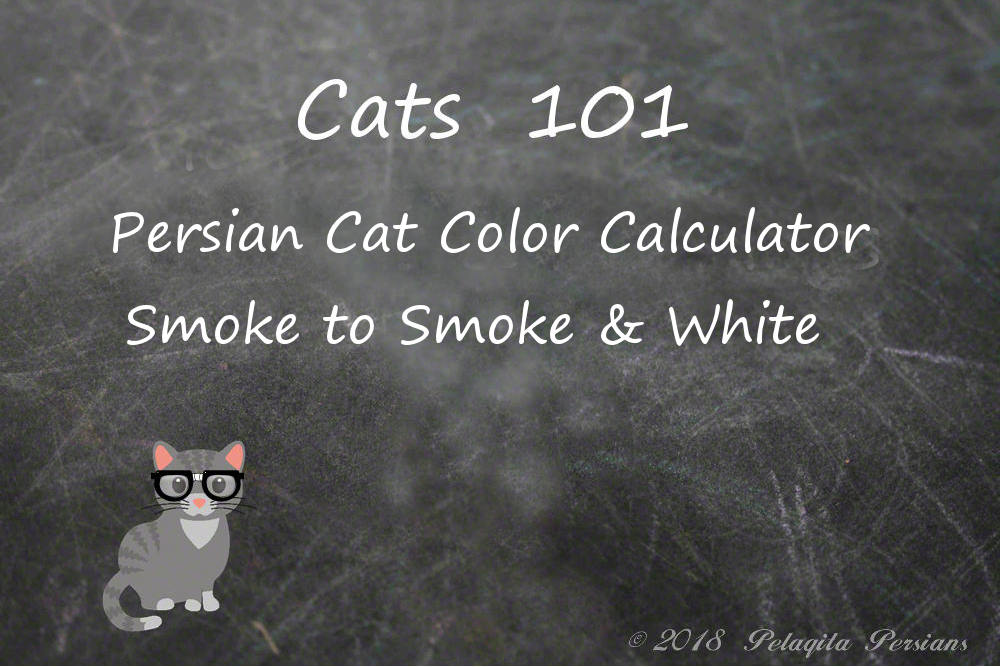 Persian cat color calculator - Smoke to Smoke and White