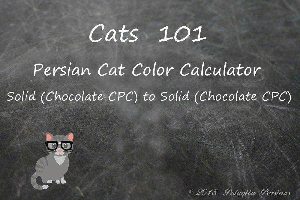 Persian cat color calculator - Solid (Chocolate CPC) to Solid (Chocolate CPC) Color Calculator