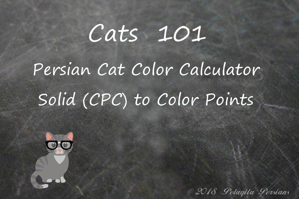 Persian cat color calculator - solid (CPC) to color point color calculator