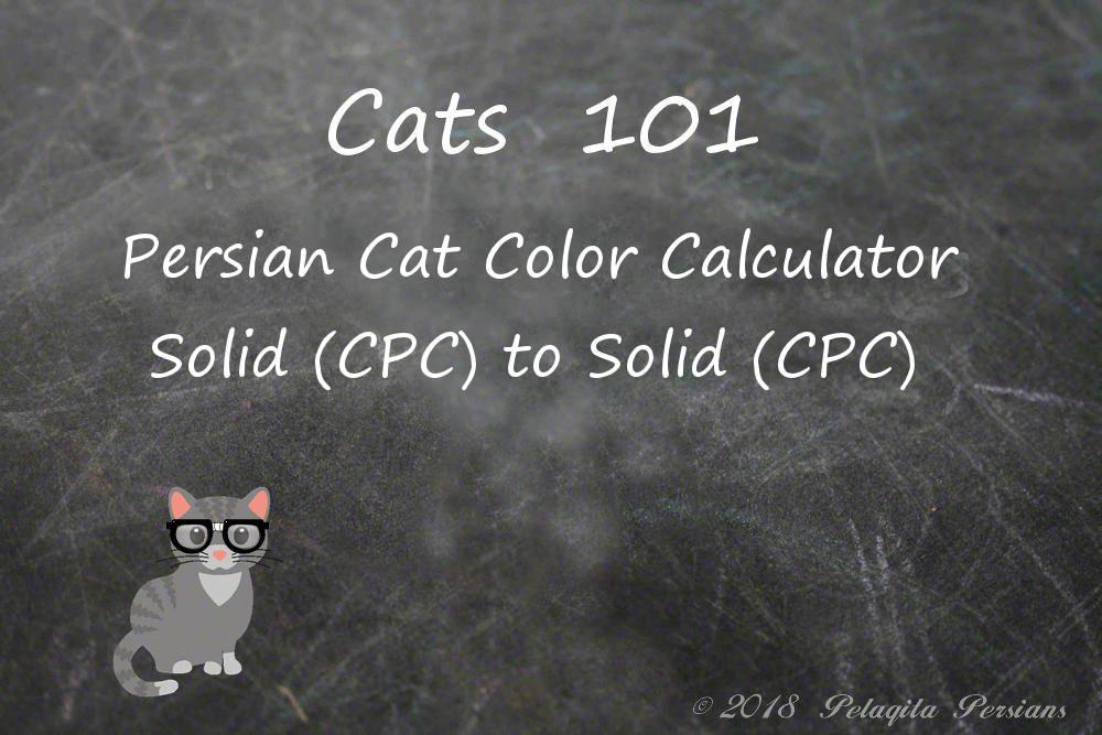 Persian cat color calculator - solid cpc to solid cpc color calculator