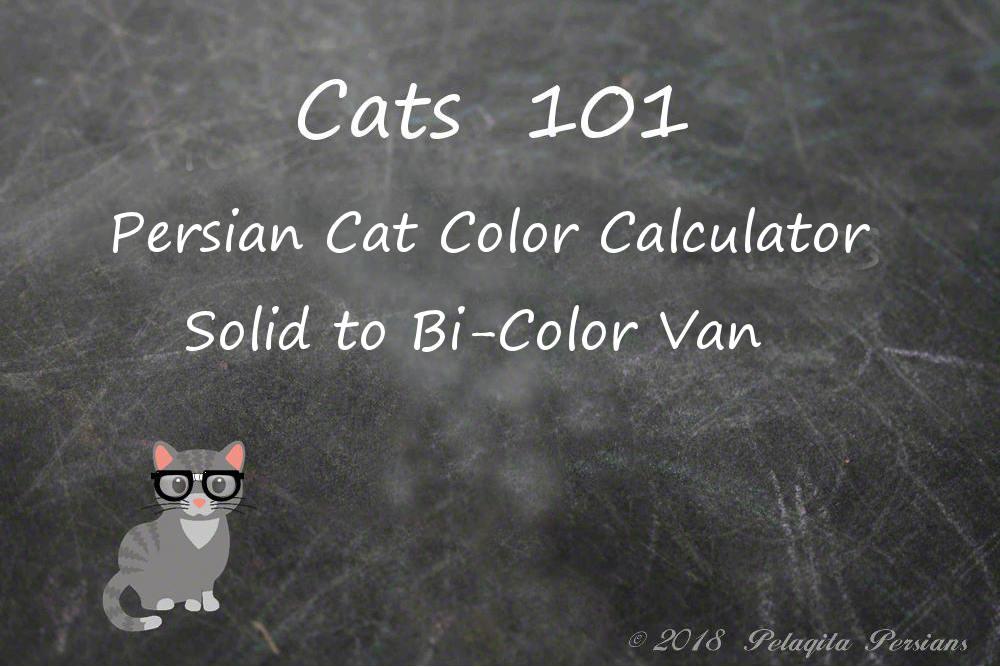 Persian cat color calculator - solid to bi-color van