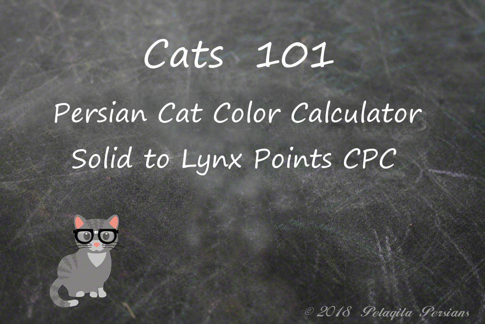 Persian Cat Color Calculator - Solid to Lynx Point CPC