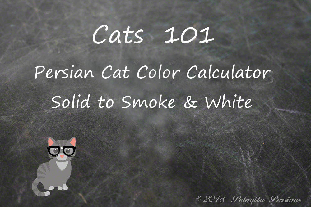 Persian cat color calculator - solid to smoke and white