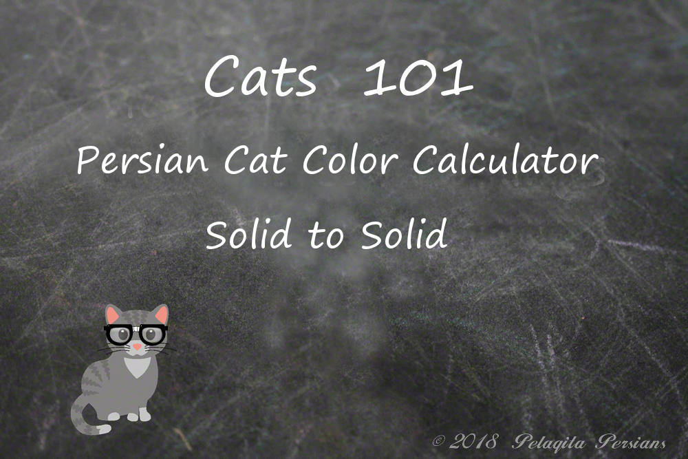 Persian cat color calculator - solid to solid