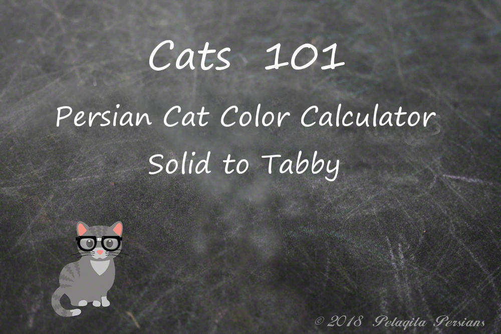 Persian Cat color calculator - Solid to Tabby