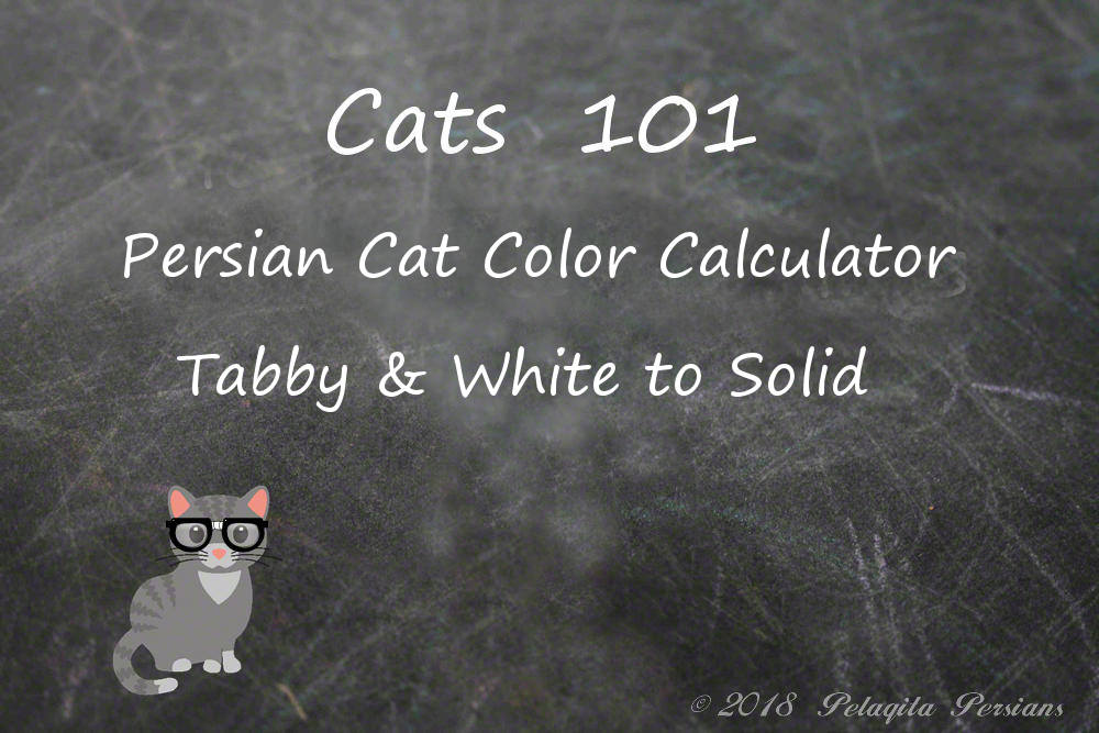 Persian cat color calculator - tabby and white to solid color calculator