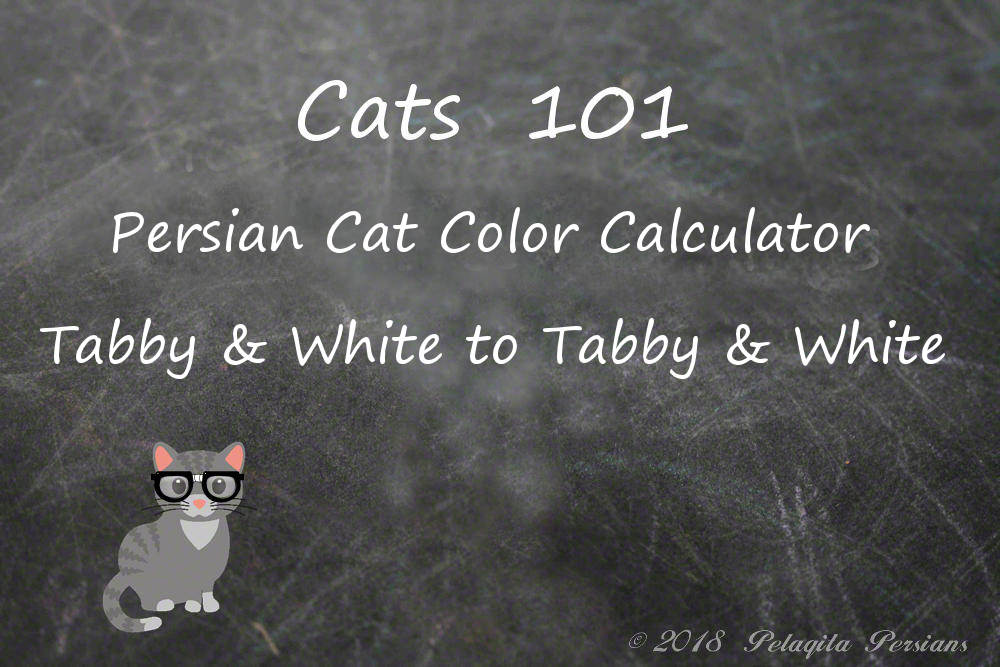 Persian cat color calculator - Tabby and white to Tabby and white